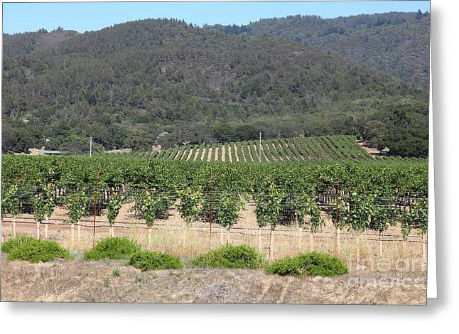 Napa Valley And Vineyards Greeting Cards - Sonoma Vineyards In The Sonoma California Wine Country 5D24602 Greeting Card by Wingsdomain Art and Photography
