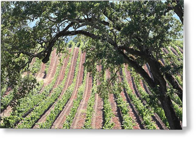 Pastoral Vineyard Greeting Cards - Sonoma Vineyards In The Sonoma California Wine Country 5D24619 square Greeting Card by Wingsdomain Art and Photography