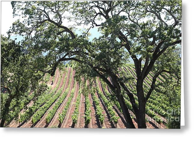 Pastoral Vineyards Greeting Cards - Sonoma Vineyards In The Sonoma California Wine Country 5D24619 Greeting Card by Wingsdomain Art and Photography