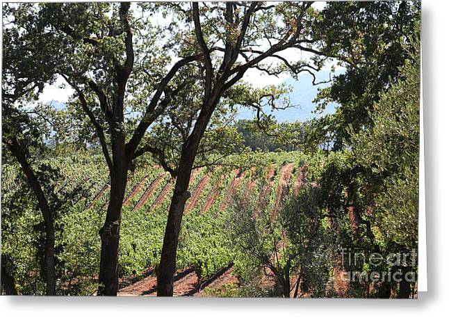 Pastoral Vineyard Greeting Cards - Sonoma Vineyards In The Sonoma California Wine Country 5D24622 Greeting Card by Wingsdomain Art and Photography