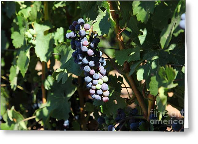 Fruit And Wine Greeting Cards - Sonoma Vineyards In The Sonoma California Wine Country 5D24628 Greeting Card by Wingsdomain Art and Photography