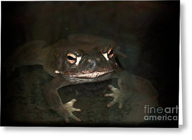 Sonora Toad Greeting Card by Ron Sanford