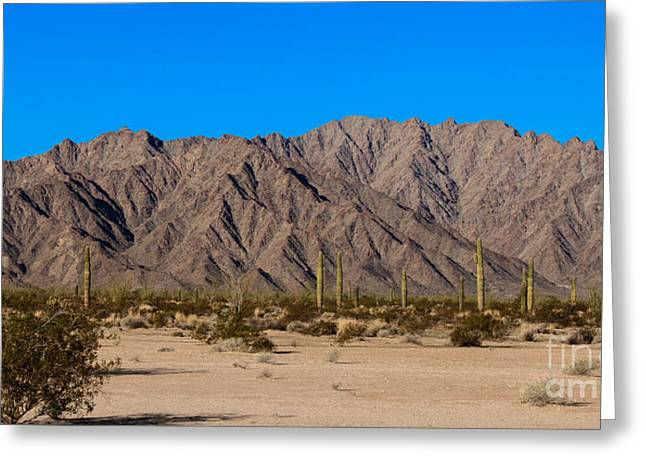 Picturesqueness Greeting Cards - Sonoran Desert Landscape Greeting Card by Robert Bales
