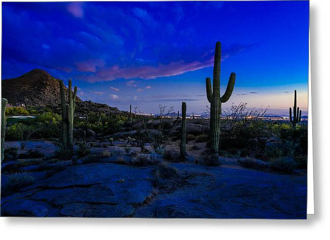Saguaro Cactus Greeting Cards - Sonoran Desert Saguaro Cactus Greeting Card by Scott McGuire