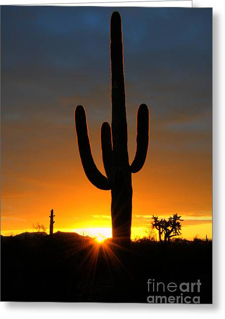 Canadian Photographer Greeting Cards - Sonoran Desert Sunrise 3 Greeting Card by Bob Christopher