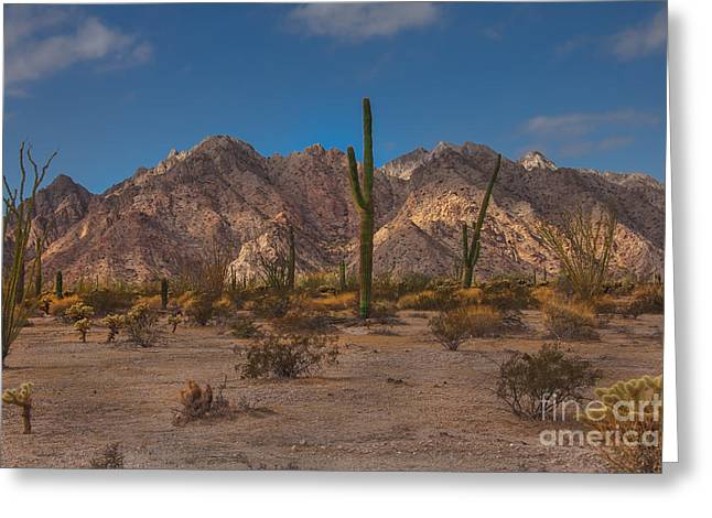 Picturesqueness Greeting Cards - Sonoran  Greeting Card by Robert Bales