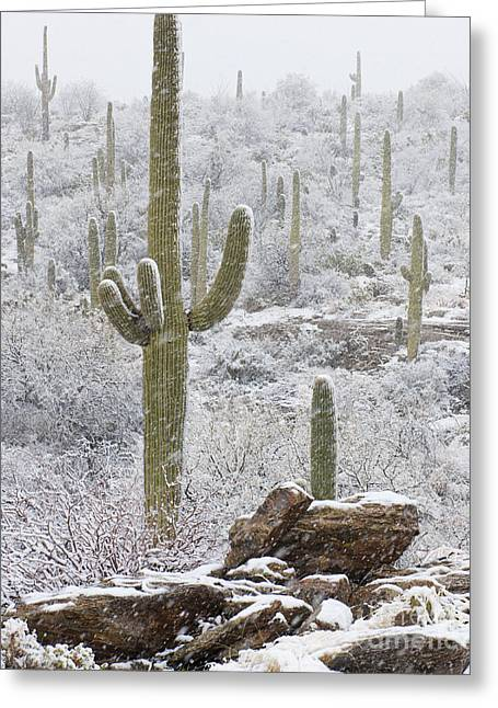 Sonoran Snowfall Greeting Card by Timm Chapman