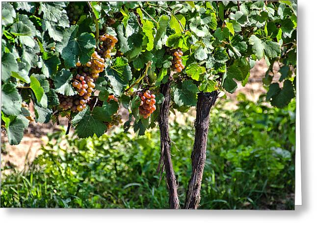 Concord Greeting Cards - Soon to be Wine Greeting Card by Linda Muir