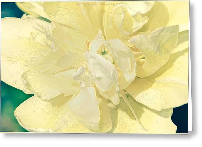 Soothing Daffodils Greeting Card by Sonali Gangane