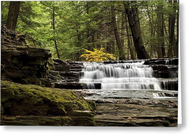 Beautiful Creek Greeting Cards - Soothing Waters Greeting Card by Christina Rollo