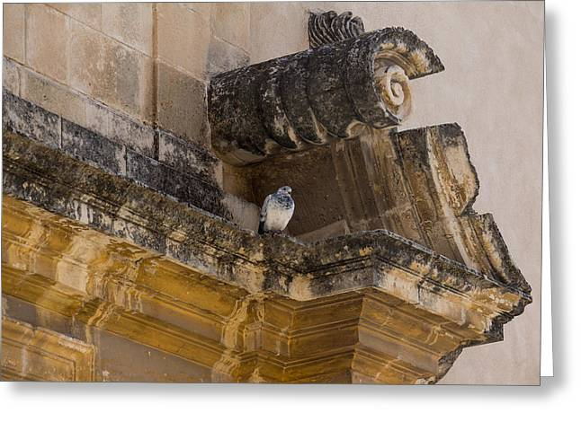 Lintel Greeting Cards - Sophisticated Baroque Bird Perch Greeting Card by Georgia Mizuleva