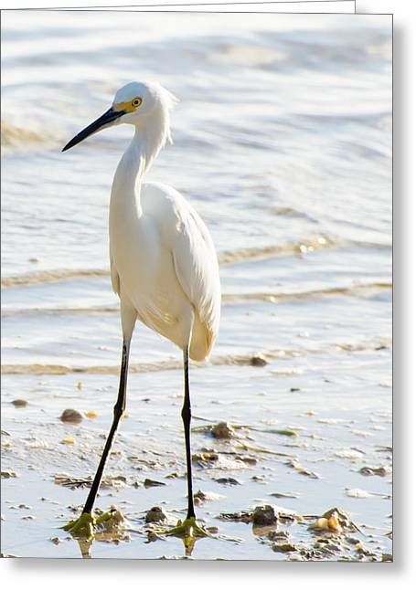 Florida Keys Greeting Cards - Sophistication Greeting Card by Vaughn Garner