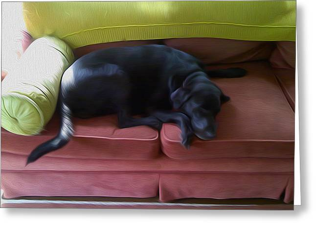 Dog On Couch Greeting Cards - Sophy Sleeping Greeting Card by Tom Kostro