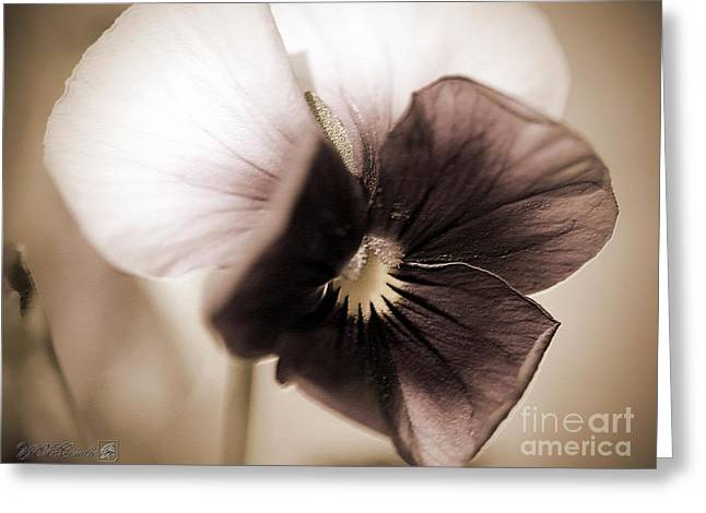 Sorbet Digital Art Greeting Cards - Sorbet Viola Greeting Card by J McCombie