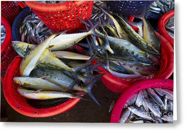 Asian Market Greeting Cards - Sorted Fish, Thailand Greeting Card by John Shaw