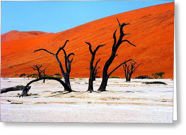 Most Favorite Photographs Greeting Cards - Sossusvlei Scene Greeting Card by Noa Yerushalmi