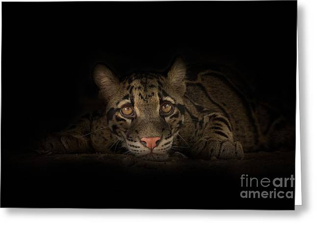 Compelling Greeting Cards - Soul Connection Greeting Card by Ashley Vincent