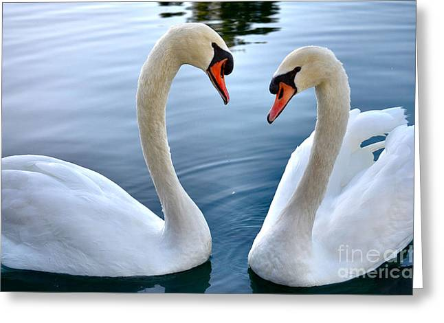 Swans... Greeting Cards - Soul Mates Greeting Card by Deb Halloran