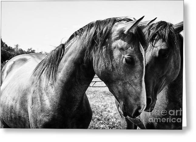 Country Photographs Greeting Cards - Soul Mates Greeting Card by Toni Hopper