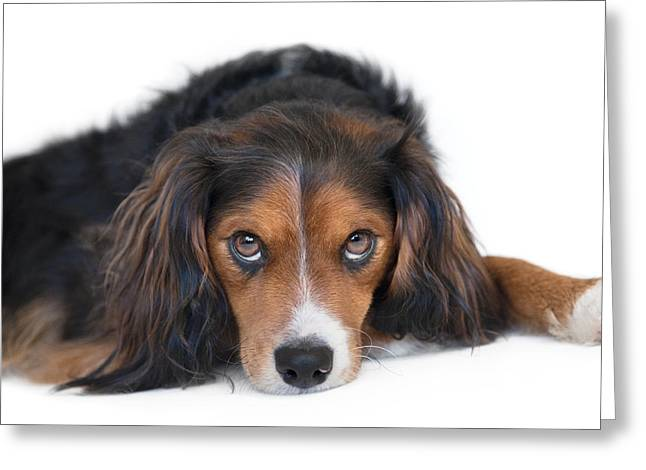 Soulful Black Tan And White Pup Greeting Card by Natalie Kinnear