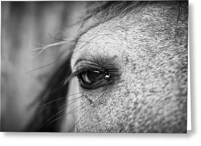 Eyelash Greeting Cards - Soulful Horse Eye Greeting Card by Priya Ghose