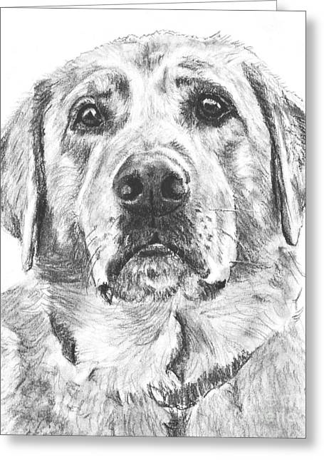 Soulful Lab Face Greeting Card by Kate Sumners