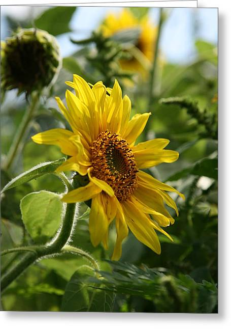 Neal Eslinger Photography Greeting Cards - Soulshine Greeting Card by Neal  Eslinger