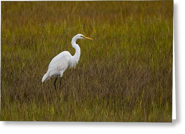 Water Fowl Greeting Cards - Soundside Park Topsail Island Egret Greeting Card by Betsy A  Cutler