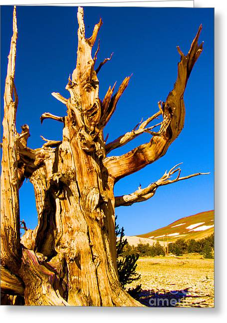 Oldest Living Tree Greeting Cards - Sourcerer Closeup Greeting Card by Adam Jewell