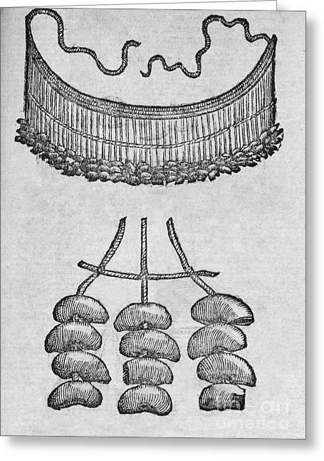 Soursop Greeting Cards - Soursop Seed Necklace, 16th Century Greeting Card by Middle Temple Library