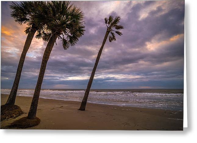 Ocean Landscape Greeting Cards - South Carolina Palmetto Trees Greeting Card by Serge Skiba