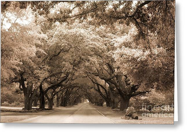 Surreal Nature Photography Greeting Cards - South Carolina Sepia Oak Trees Nature Landscape Greeting Card by Kathy Fornal