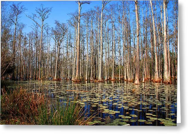 Susanne Van Hulst Greeting Cards - South Carolina Swamps Greeting Card by Susanne Van Hulst