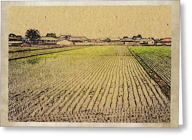 Clayton Mixed Media Greeting Cards - South Korea Rice Paddy Greeting Card by Dennis Buckman