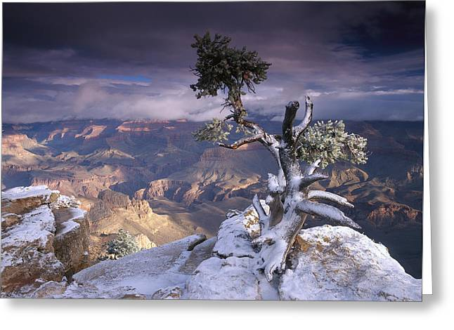 Yaki Greeting Cards - South Rim Of Grand Canyon Greeting Card by Tim Fitzharris