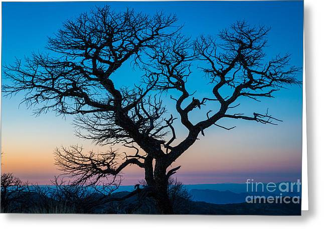South Rim Greeting Cards - South Rim Tree Greeting Card by Inge Johnsson