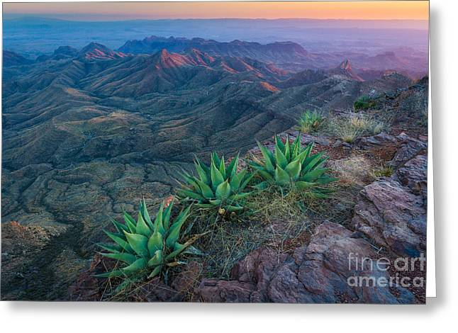 South Rim Greeting Cards - South Rim Twilight Greeting Card by Inge Johnsson