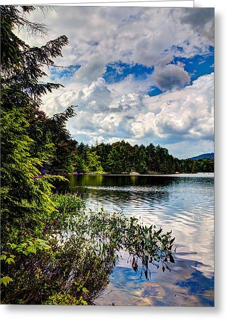 Lush Green Greeting Cards - South Shore of Bubb Lake Greeting Card by David Patterson