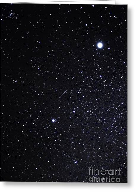 Sirius Greeting Cards - South Taurids Meteor Shower Greeting Card by Thomas R Fletcher