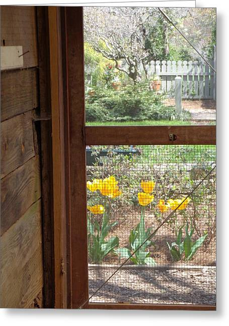 Screen Doors Greeting Cards - Southern Afternoon Greeting Card by Donna  Hernandez