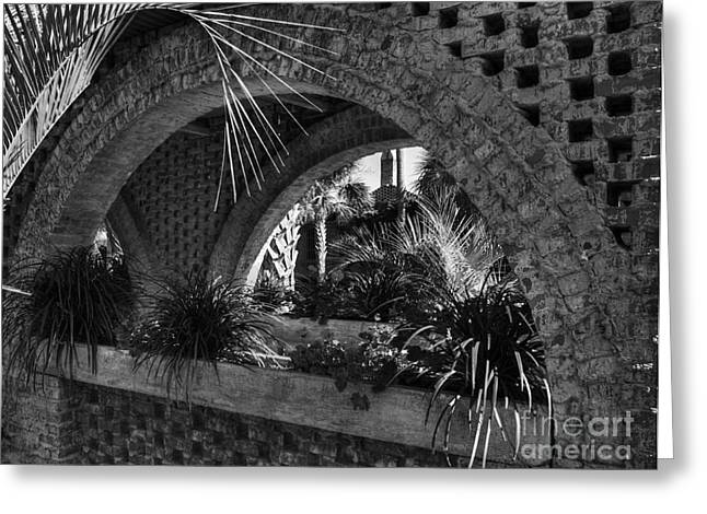 Shades State Park Greeting Cards - Southern Arches BW Greeting Card by Mel Steinhauer