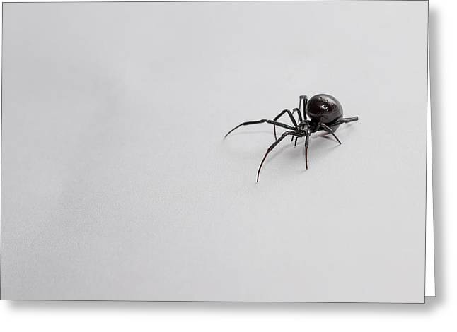 Black Widow Photographs Greeting Cards - Southern Black Widow Spider Greeting Card by Amber Flowers