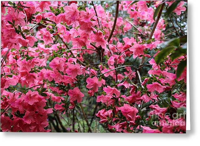 Raindrops On Flowers Greeting Cards - Southern Charm Greeting Card by Carol Groenen