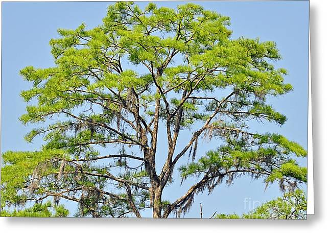 Old Tree Photographs Greeting Cards - Southern Cypress Greeting Card by Al Powell Photography USA