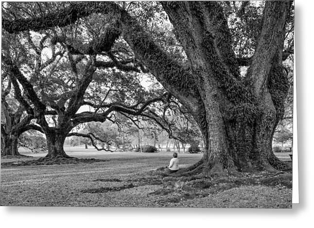Oak Alley Plantation Greeting Cards - Southern Dreamer bw Greeting Card by Steve Harrington