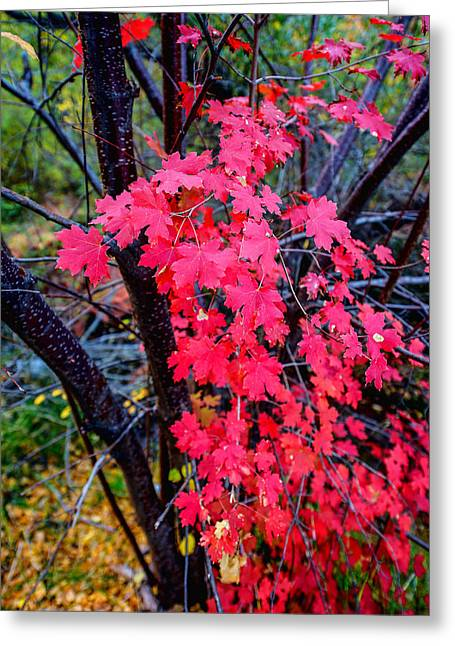 Fall Trees Greeting Cards - Southern Fall Greeting Card by Chad Dutson