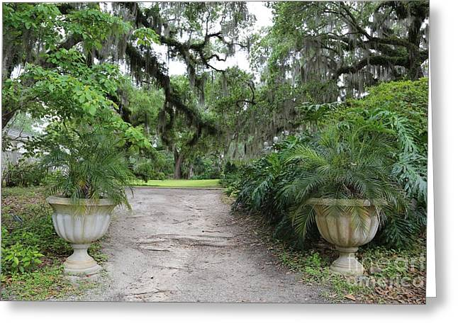 Goodwood Greeting Cards - Southern Garden Welcome Greeting Card by Carol Groenen