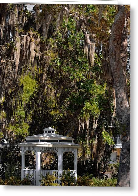 Ornamental Plants Greeting Cards - Southern Gothic in Mount Dora Florida Greeting Card by Christine Till