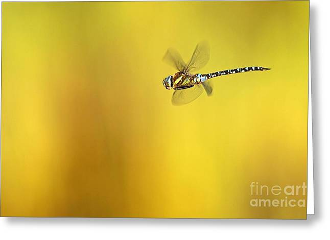 Blue Darner Dragonfly Greeting Cards - Southern Hawker Dragonfly Greeting Card by Bildagentur-online