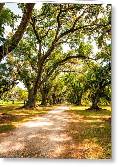 Evergreen Plantation Greeting Cards - Southern Lane 2 Greeting Card by Steve Harrington